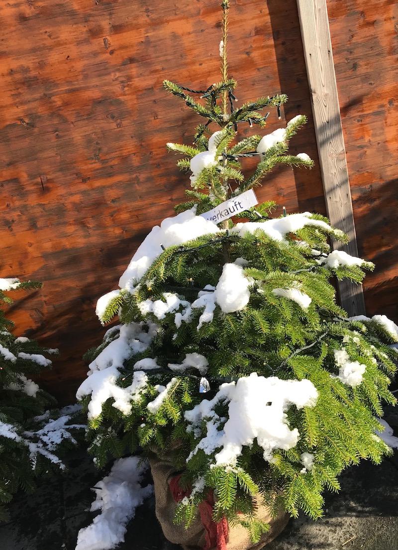 Dieser Topf-Christbaum darf sich schon auf seinen Weihnachtseinsatz freuen.